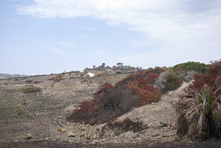 Selinunte, Italy - September 02, 2018: vegetation at selinunte archaeological park after the fire of august 2018