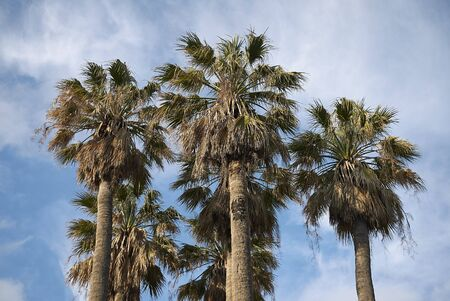 View of a group of palms Imagens