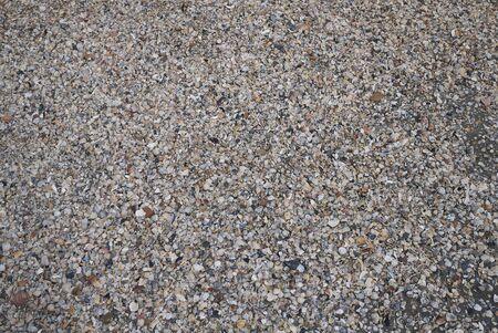 Milano Marittima, Italy -  Broken seasheels by the shore