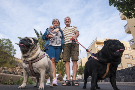 seniors who spend time with their domestic dogs