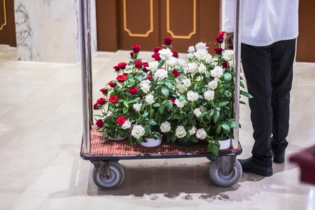Hotel concierge deliver a lor of white and red roses to an hotel room for wedding or present for people inlove. Romantic scene concept