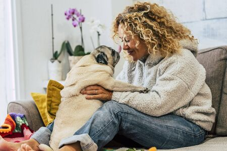 Playful happy activity at home with human woman people and funny pug dog kissing them on the sofa - cheerful young female play with domestic best friend at home 写真素材