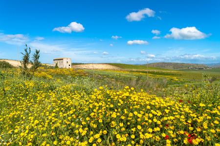 Picturesque Sicilian Scenery, Caltanissetta, Italy, Europe