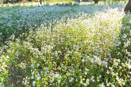 Beautiful Flowery Meadow, Sicily, Italy, Europe Stockfoto
