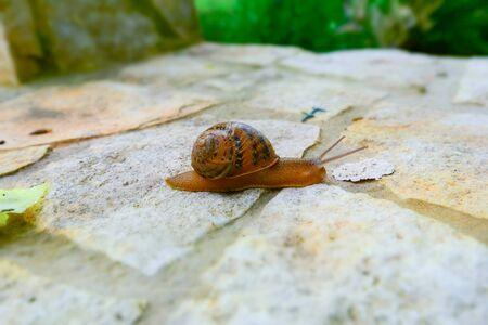 Close-up of a Beautiful Snail, Animals, Nature, Macro