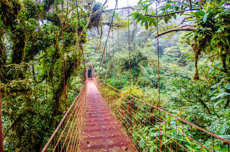 bridge in the forest: Bridge in Rainforest - Costa Rica - Monteverde