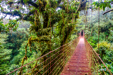 rica: Bridge in Rainforest - Costa Rica - Monteverde