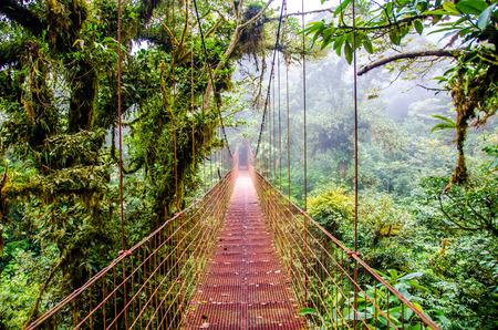 Bridge in Rainforest - Costa Rica - Monteverde