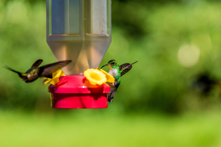 Beautiful Hummingbird with amazing colors Stock Photo