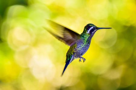 Colibrí hermoso con colores asombrosos Foto de archivo