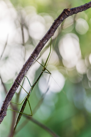 Mantis animal in nature Stock Photo