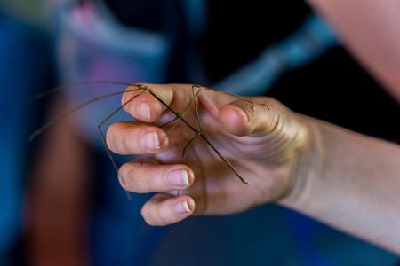 Mantis animal on human hand