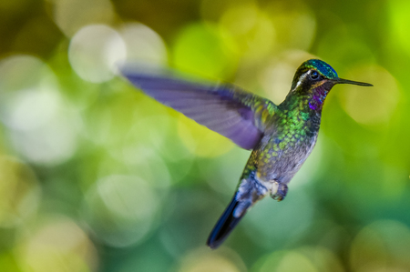 Beautiful Hummingbird with amazing colors Фото со стока
