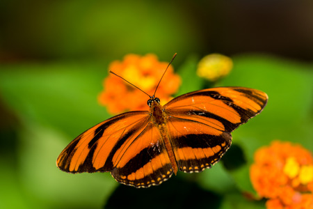 Butterfly in the nature on flower