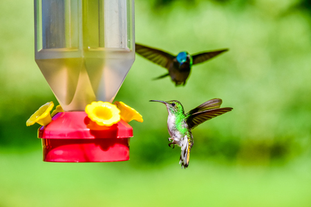 Beautiful Hummingbird with amazing colors Stock Photo