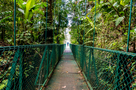 Canopies: Hanging Bridges in Cloudforest - Costa Rica