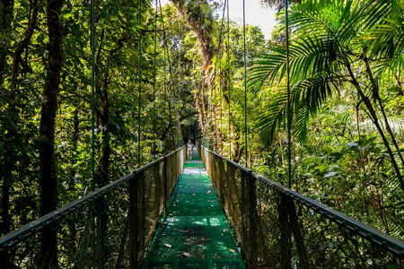 Hanging Bridges in Cloudforest - Monteverde, Costa Rica 免版税图像