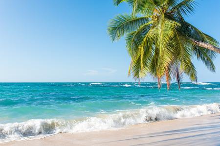 コスタリカは、野生と美しいカリブ海沿岸でプンタ Uva ビーチ 写真素材 - 83727762