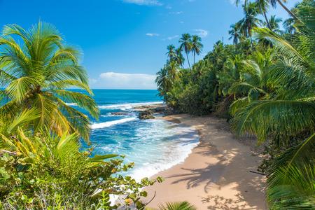 マンサニージョ野生カリブ海のビーチでプエルト ビエホ、コスタリカ 写真素材