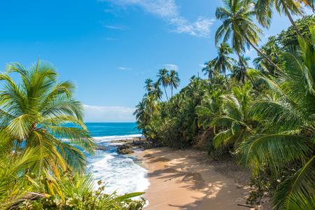 マンサニージョ野生カリブ海のビーチでプエルト ビエホ、コスタリカ 写真素材 - 83358522