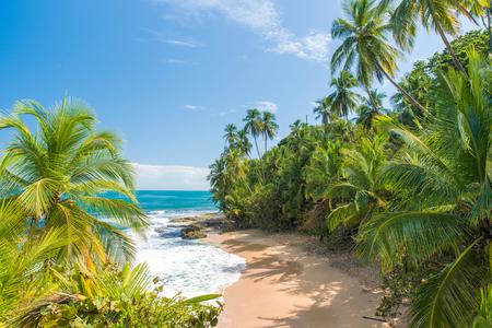 푸에르 Viejo, 코스타리카에서 만사 니요의 야생 카리브 해변 스톡 콘텐츠