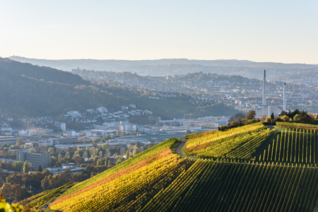Vineyards at Stuttgart - beautiful wine region in the south of Germany