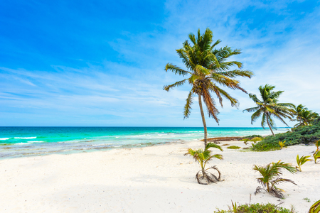 Paradise beach with beautiful palm trees - Caribbean sea in mexico, Tulum