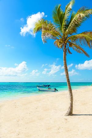 Akumal 비치 - 파라다이스 베이 Quintana Roo, 멕시코 - 카리브 해안 해변