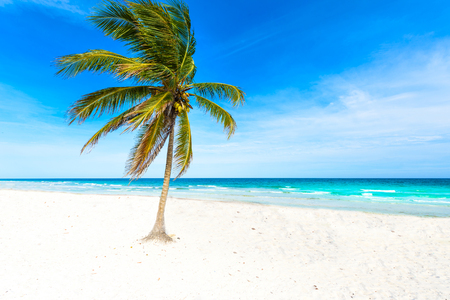Paradise beach with beautiful palm trees - Caribbean sea in mexico, Tulum