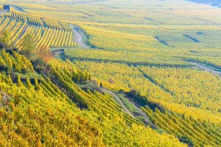 Vineyards at Chateau de Kaysersberg -  alsace in France - travel destination in Europe Stock Photo