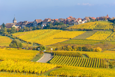 Beautiful autumn landscape with vineyards near the historic village of Riquewihr, Alsace, France Stock Photo