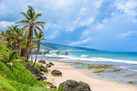 Rock formation on the beach of Bathsheba, East coast of  island Barbados, Caribbean Islands