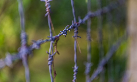 wire fence: Barbed wire Stock Photo