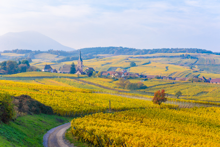 Vineyards at Mittelbergheim and Andlau, a little village in Alsace, a region in eastern France - Europe