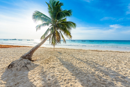 Paradise Beach also called Playa Paraiso at sunrise - beautiful and tropical caribbean coast of Tulum in Quintana Roo, Riviera Maya, Mexico Reklamní fotografie