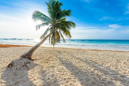 Paradise Beach also called Playa Paraiso at sunrise - beautiful and tropical caribbean coast of Tulum in Quintana Roo, Riviera Maya, Mexico Standard-Bild
