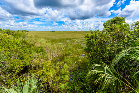 Pa-Hay-Okee Lookout Tower and trail of the Everglades National Park. Boardwalks in the swamp. Florida, USA.
