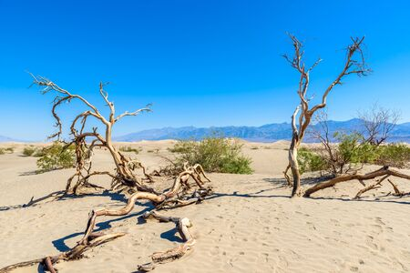 Mesquite sand dunes in desert of Death Valley, California, USA. Stock Photo