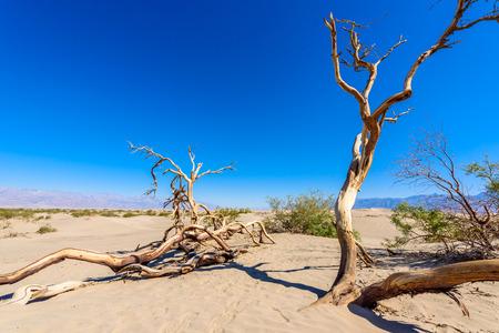 Mesquite sand dunes in desert of Death Valley, California, USA. Stock Photo