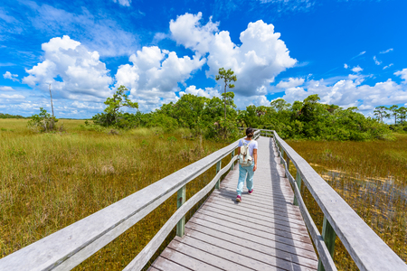 caoba: Mahogany Hammock Trail of the Everglades National Park. Boardwalks in the swamp. Florida, USA.