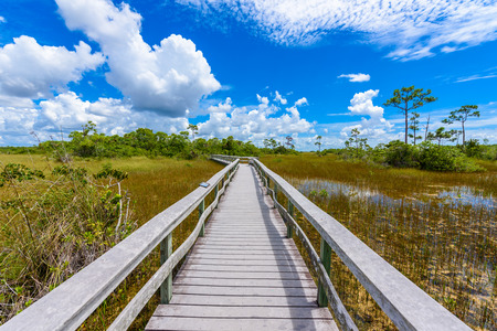 Mahogany Hammock Trail of the Everglades National Park. Boardwalks in the swamp. Florida, USA.