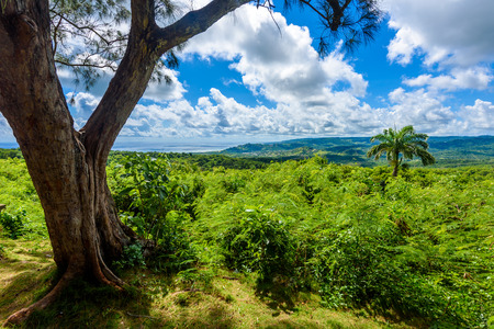 Farley Hill National Park on the Caribbean island of Barbados. It is a paradise destination with a white sand beach and turquoiuse sea. Stock Photo