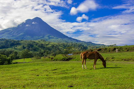 Vulcano Arenal - Horses on pasture 스톡 콘텐츠