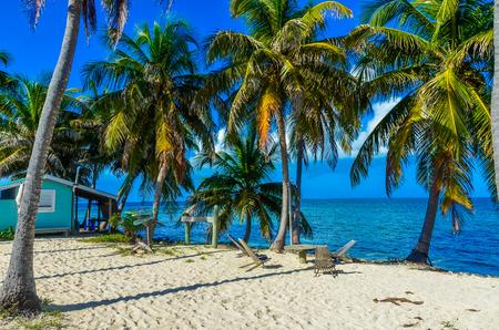 Paradise beach on island caye Carrie Bow Cay Field Station, Caribbean Sea, Belize. Tropical destination. Stock Photo