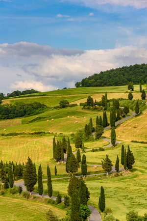 Cypress tree scenic winding road in Monticchiello - Valdorcia - near Siena, Tuscany, Italy, Europe. 免版税图像 - 104443691