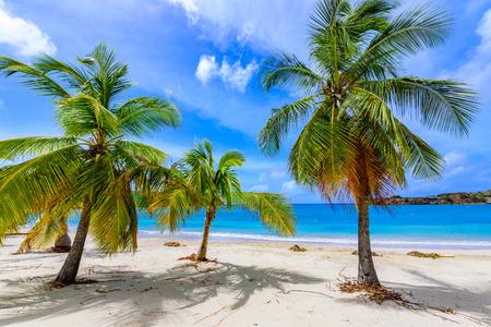 Galleon Beach on  Caribbean island Antigua, English Harbour, paradise bay at tropical island in the Caribbean Sea Standard-Bild
