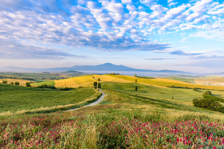 Landscape scenery early in the morning of Tuscany in Italy, with cypresses trees and green field with beautiful colors on summer day, travel destination in Europe