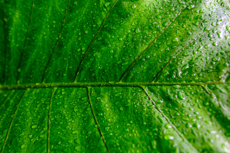 Structure in Nature - Leaf with beautiful design and structure