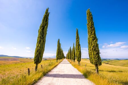 Italian cypress trees alley and a white road to farmhouse in rural landscape. Italian countryside of Tuscany, Italy, Europe.
