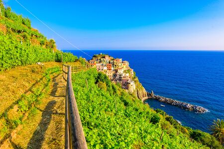 Manarola village in beautiful scenery of mountains and sea - Spectacular hiking trails in vineyard with flowers in Cinque Terre National Park,  Liguria, Italy, Europe